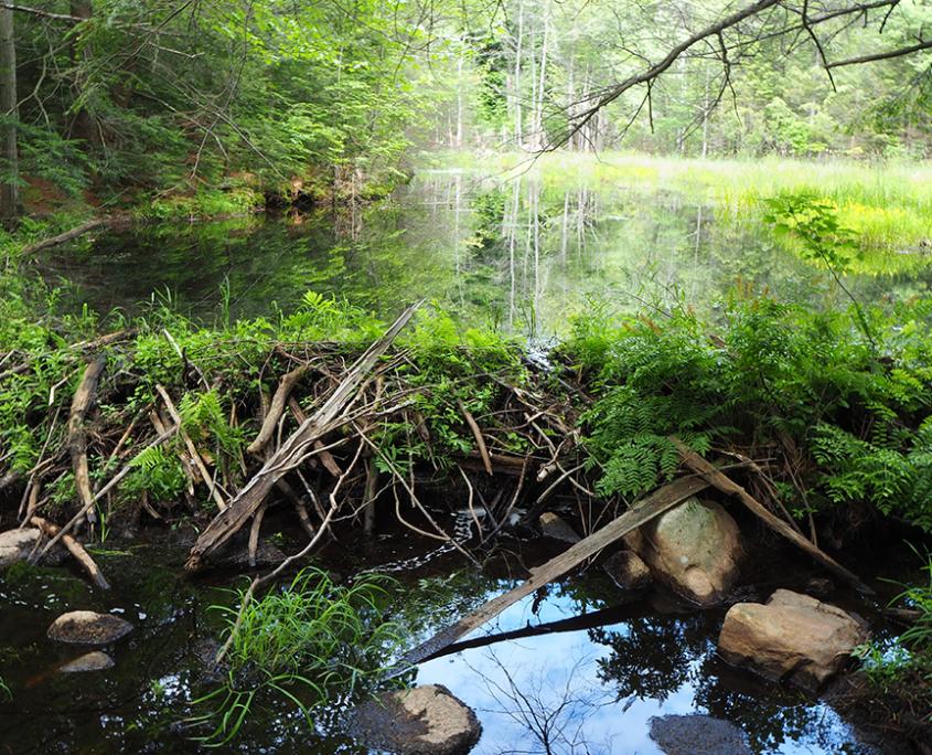 Wilderness Trust Accreditation Renewed
