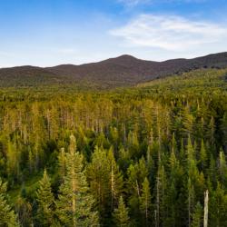 Grafton Forest Wilderness Preserve