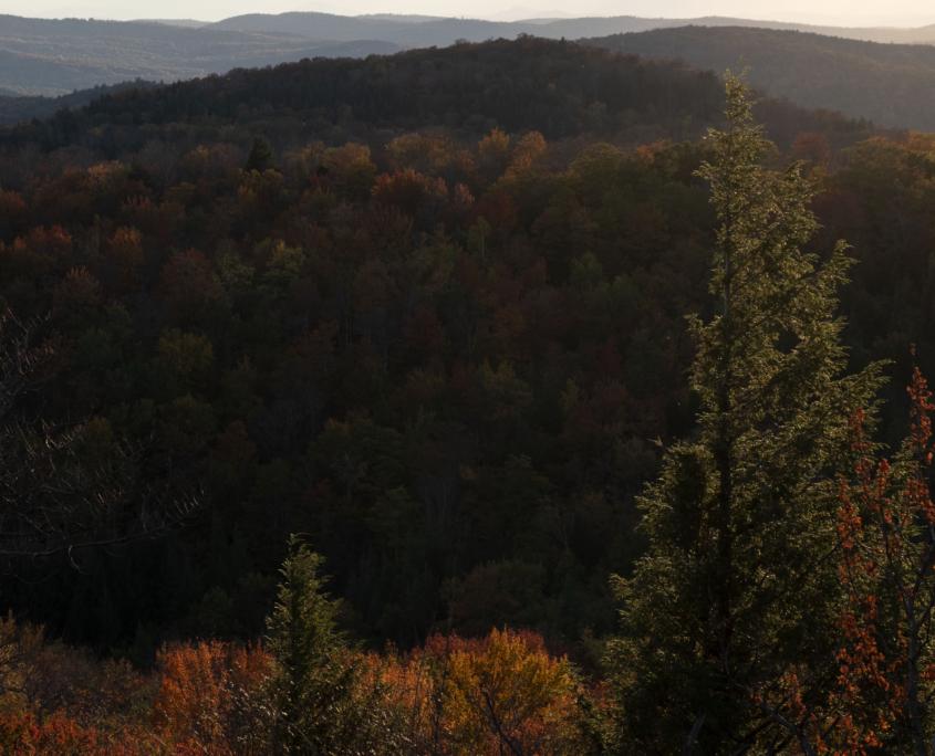 Video Release: Rewilding the Northeast
