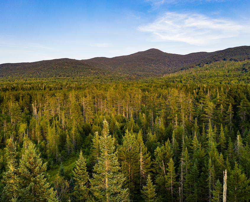 Campaign Launch: Grafton Forest Wilderness Preserve
