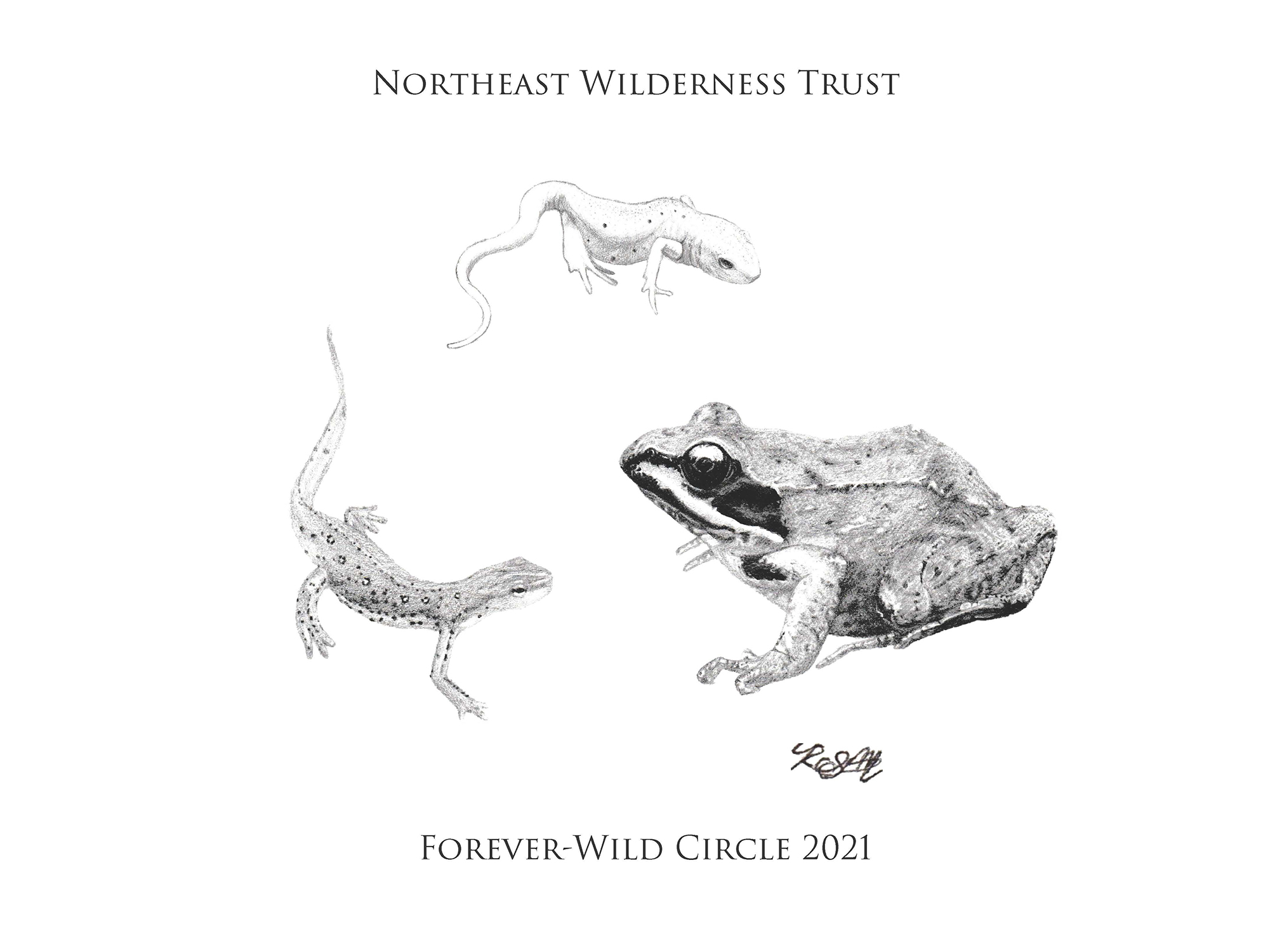 Circle of three amphibians - a wood frog, a newt, and a red eft.