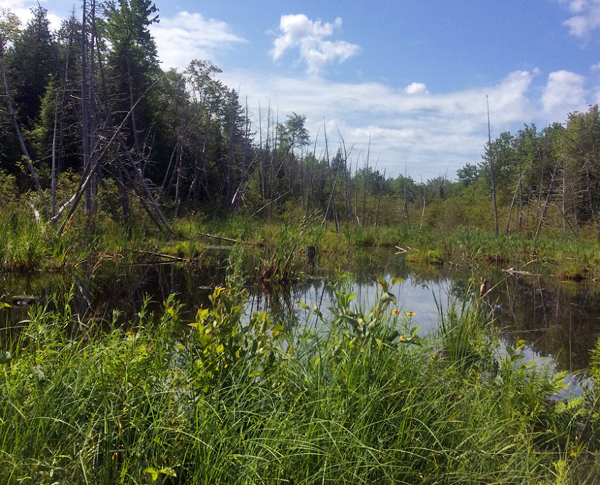 267 Acres Added to Maine Preserve