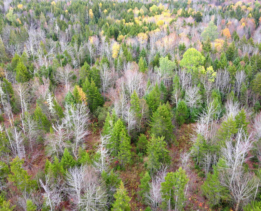 Maine's Newest Wilderness Area Protects 3,415 Acres
