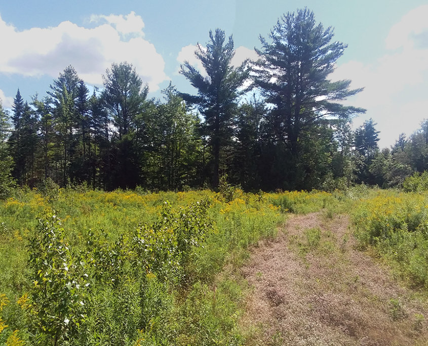 Help Save 200 Acres in Maine!