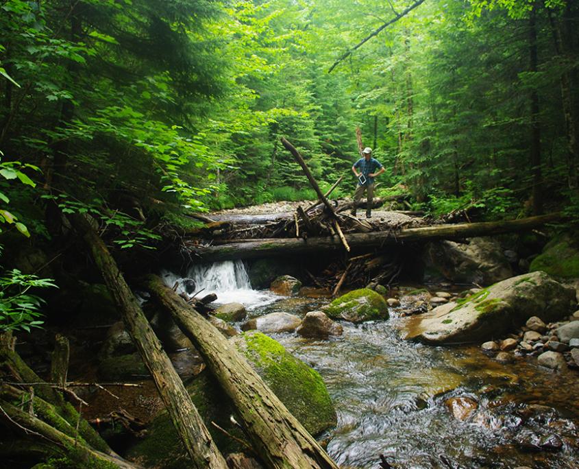When Water Meets Wilderness