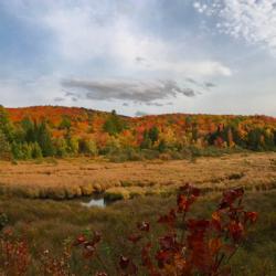 Woodbury Mountain Wilderness Preserve